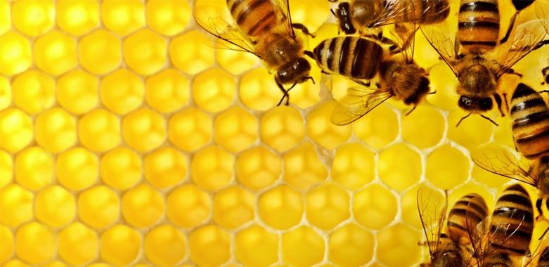 Méhészeti tevékenységgel kapcsolatos felhívás